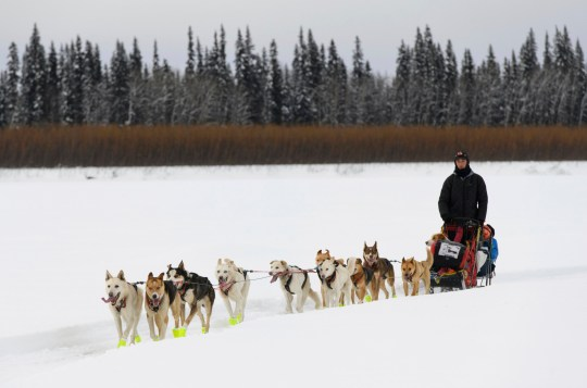 Matt Hall and his team reach Eagle Island, Alaska, during the Iditarod Trail Sled Dog Race on Saturday, March 9, 2019. Nicolas Petit was the first musher Saturday to leave the checkpoint at Eagle Island, about 592 miles (953 kilometers) into the 1,000 mile (1609 kilometer) race across the Alaska wilderness to Nome. (Marc Lester/Anchorage Daily News via AP)