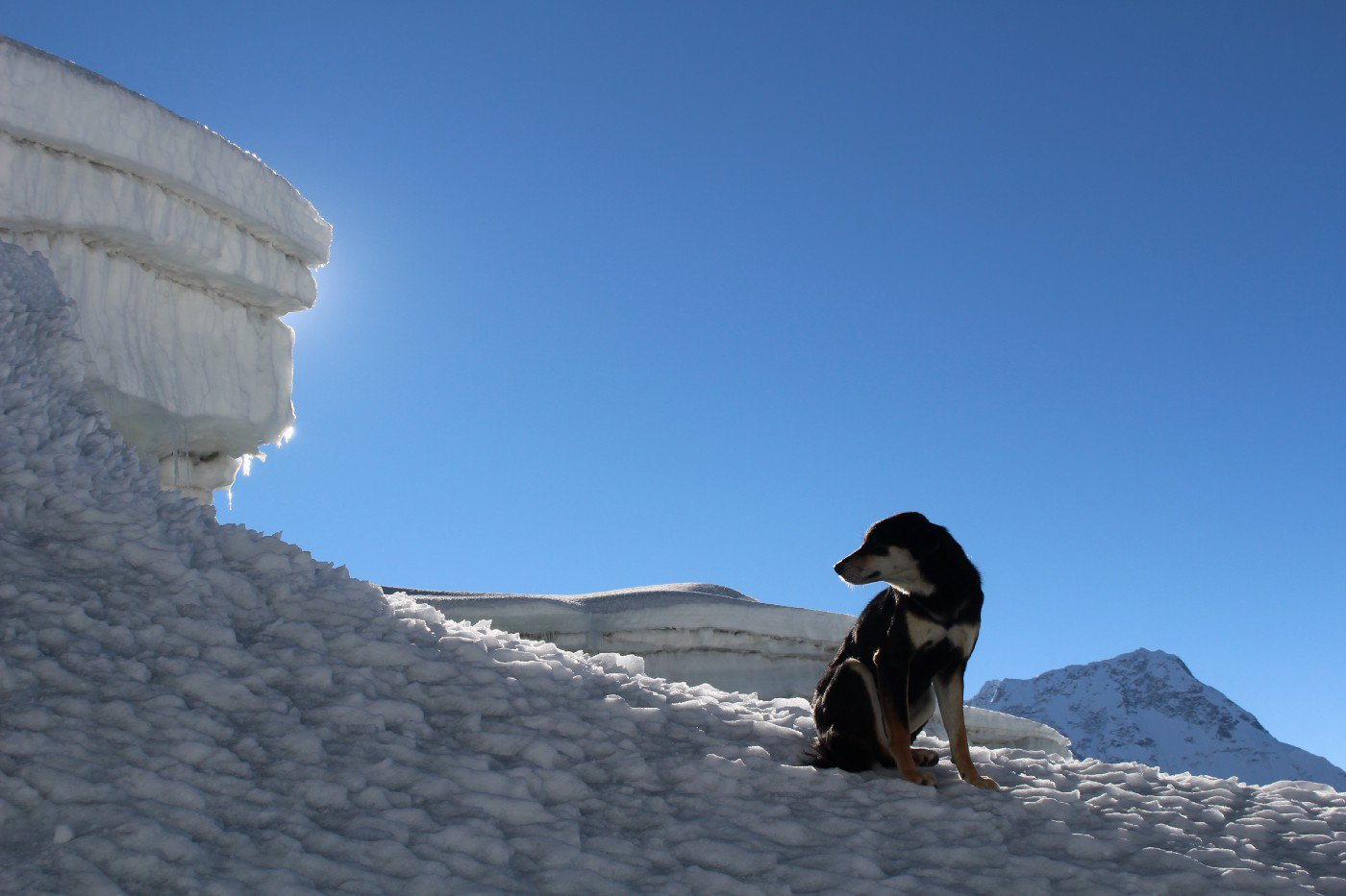 Stray dog scales 24,000 Himalayan mountain Provider: Don Wargowsky Source: https://blog.usejournal.com/stray-dog-climbs-23-000-mountain-89c5ddd57285