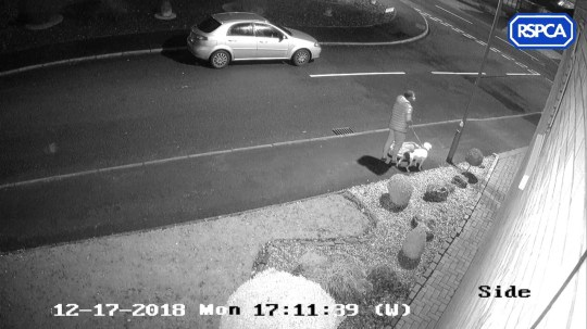 Undated handout CCTV screengrab issued by the RSPCA of a man abandoning a Staffordshire bull terrier in Trentham, Stoke-on-Trent on Monday December 17. The dog named Snoop has been rehomed in Herefordshire. His plight took his story around the world, with an offer from LA-based rapper Snoop Dogg offering him a home. PRESS ASSOCIATION Photo. Issue date: Tuesday March 12, 2019. See PA story ANIMALS Dog. Photo credit should read: RSPCA/PA Wire NOTE TO EDITORS: This handout photo may only be used in for editorial reporting purposes for the contemporaneous illustration of events, things or the people in the image or facts mentioned in the caption. Reuse of the picture may require further permission from the copyright holder.