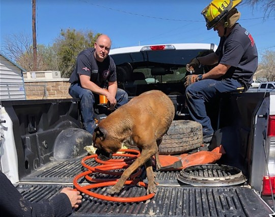 """Firefighters had to rescue this hapless pooch after it got its head stuck in a wheel rim. The owner of the unlucky boxer dog was left stunned when he discovered his curious pet with its head stuck through the metal rim of one of his wheels on Thursday, March 14. However, the quick thinking owner knew exactly what to do. He loaded up the dog, and the wheel, into the back of his truck and rushed over to Fire station 6 in Grand Praire, Texas. It took the firefighters approximately an hour to cut the rim apart enough for the dog to pull herself out. According to the rescuers, it was especially hard to free the animal since the pup had so much extra skin around her neck. The owners, like the dog, were very thankful and relieved. A spokesperson for Grad Praire Fire, said: """"Our buddy was pleased to see Station 6 B-shift come to his rescue! The rim had to be cut apart using a small saw to make room for the dog's head to pull out. He thanked them with plenty of doggy kisses!"""". 15 Mar 2019 Pictured: Boxer dog with head stuck in wheel. Photo credit: Grand Prairie Fire / MEGA TheMegaAgency.com +1 888 505 6342"""