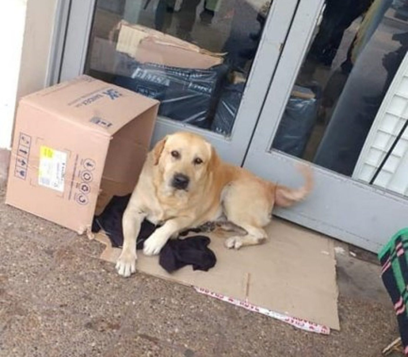 Pic shows: The dog is waiting outside the hospital. ARGENTINA: This loyal dog has been waiting at the entrance to a hospital for over a week for its owner who died inside.