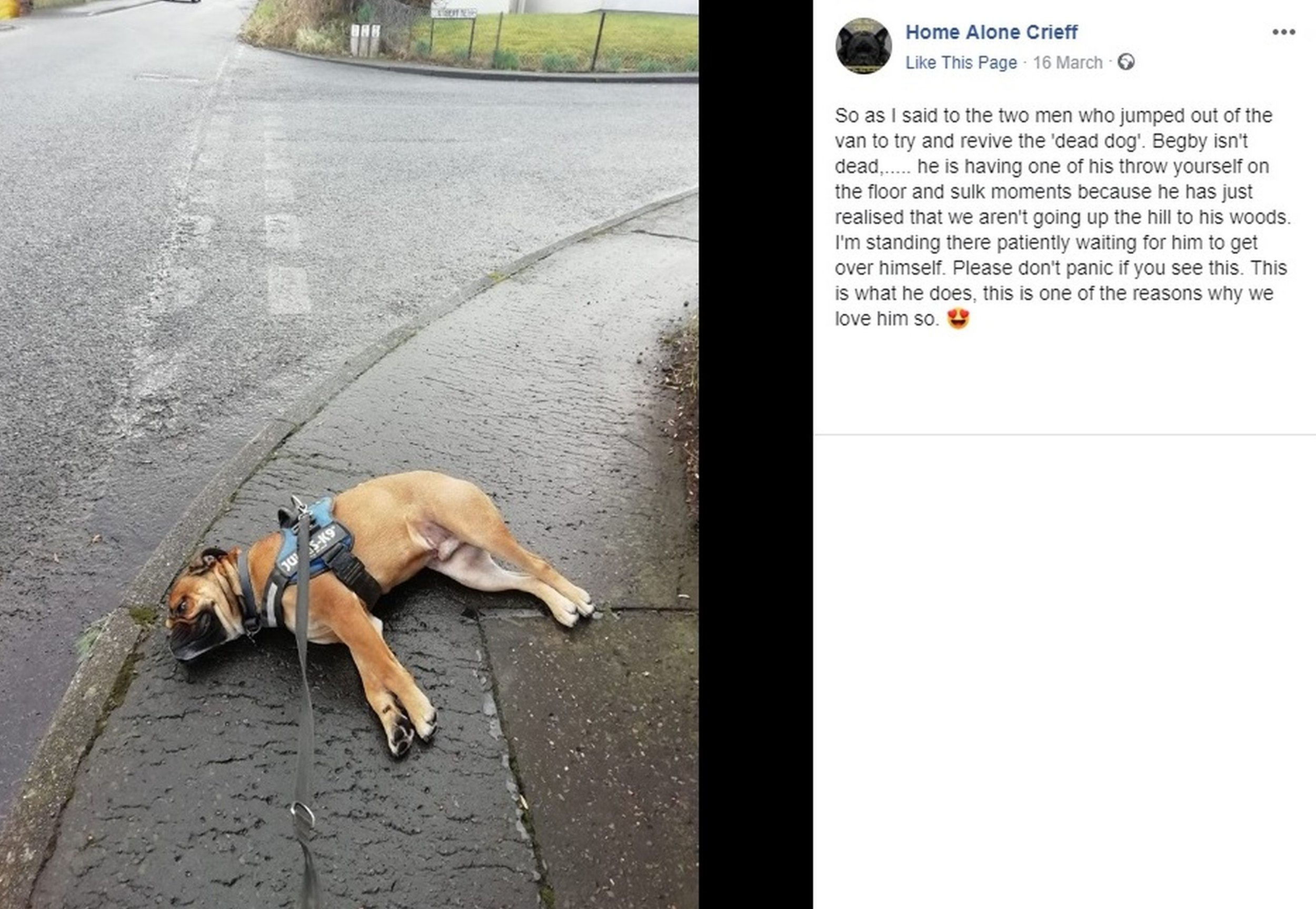 PIC FROM Kennedy News and Media (PICTURED: THE FACEBOOK POST DOG WALKER MICHELE BILSLAND SHARED AFTER BIGBIE HIT THE FLOOR AND PASSING WORKMEN THOUGHT HE WAS DEAD) Two kind-hearted workmen raced over to assist a dog walker and revive her ???dead??? dog - only to discover the petulant pooch was staging a lie-down protest at not going on his favourite walking route. Professional dog walker Michele Bilsland had agreed to take Old English Bulldog Begbie on a shorter walk then usual last Friday afternoon due to the bad weather. Michele took Begbie, named after Robert Carlyle???s character in cult film Trainspotting, out of the cul-de-sac and turned left instead of right to take him on a quick walk around the block. SEE KENNEDY NEWS COPY - 0161 697 4266