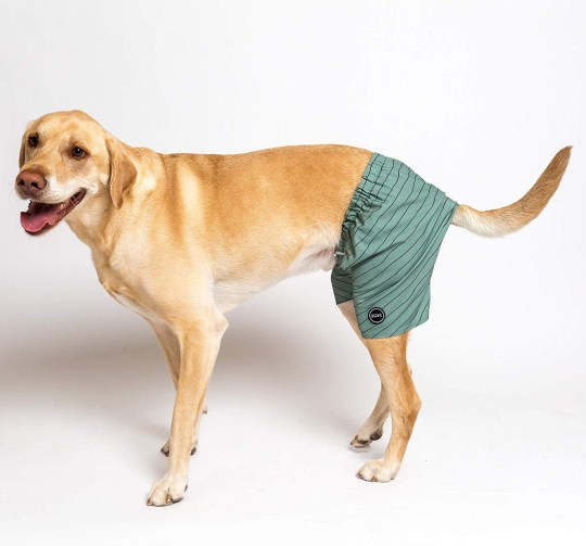 You can wear matching swim trunks with your dog