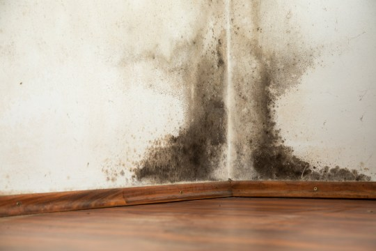 Black mold buildup in the corner of an old house; Shutterstock ID 231594124; Purchase Order: -