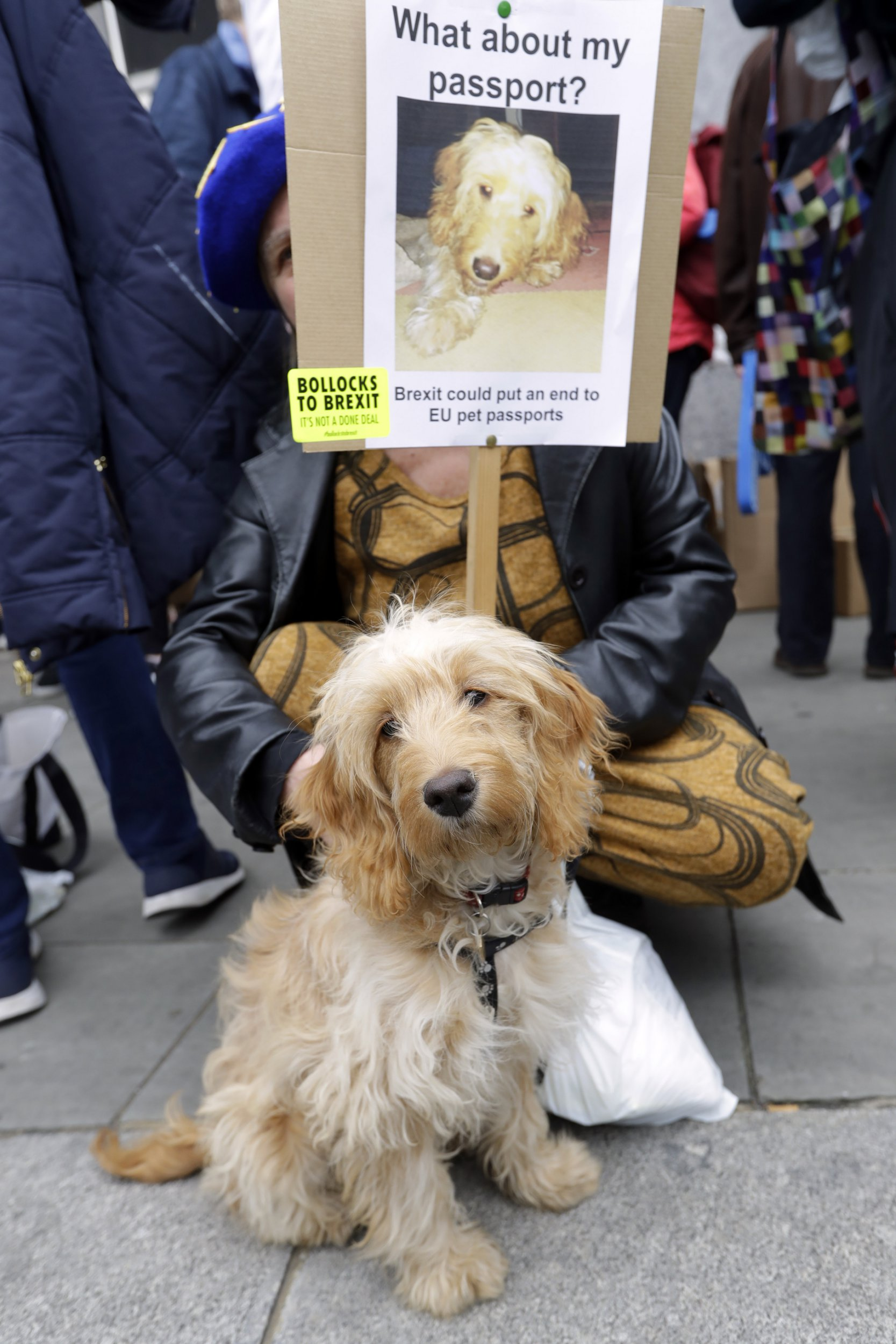 A demonstrator and her dog wait for the start of a Peoples Vote anti-Brexit march in London, Saturday, March 23, 2019. The march, organized by the People's Vote campaign is calling for a final vote on any proposed Brexit deal. This week the EU has granted Britain's Prime Minister Theresa May a delay to the Brexit process. (AP Photo/Kirsty Wigglesworth)