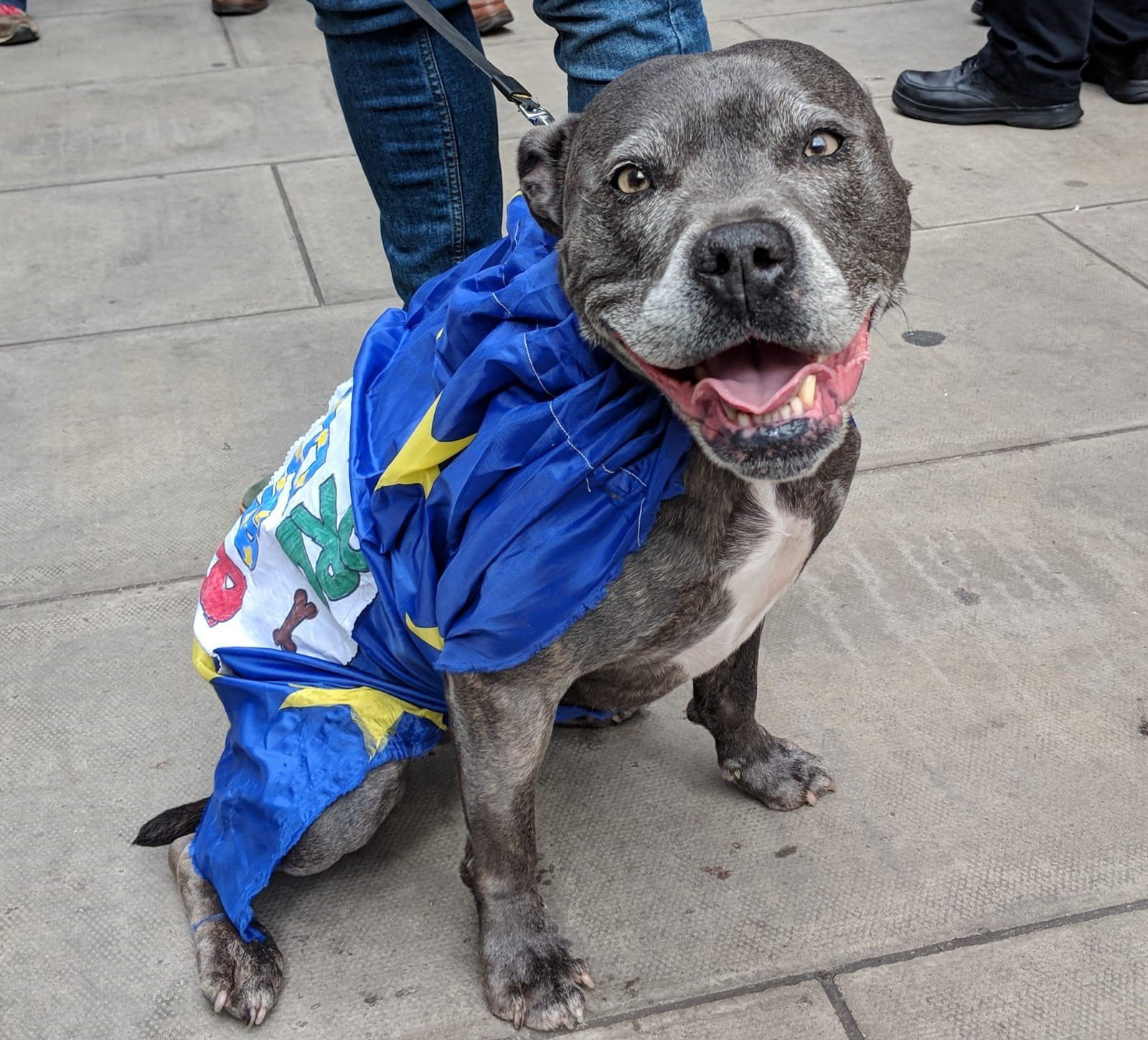 People's Vote protest - dogs
