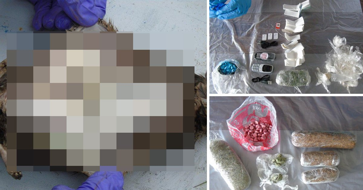 Dead rats used to smuggle drugs and mobile phones into prison