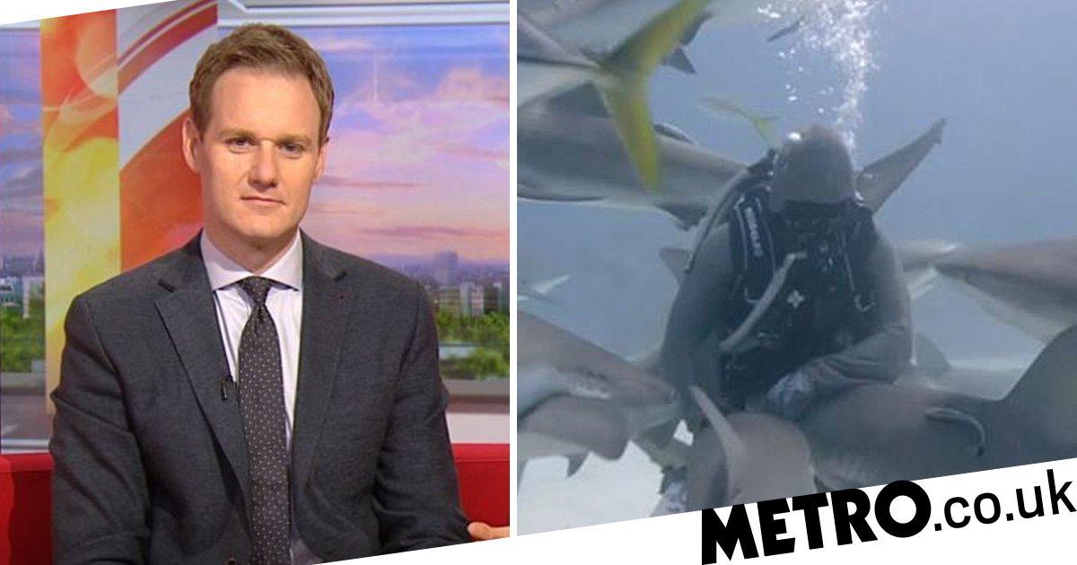 Bbc Breakfasts Dan Walker Under Fire For Fueling Fear Of Sharks Despite Amazing Work By Blue Planet Live
