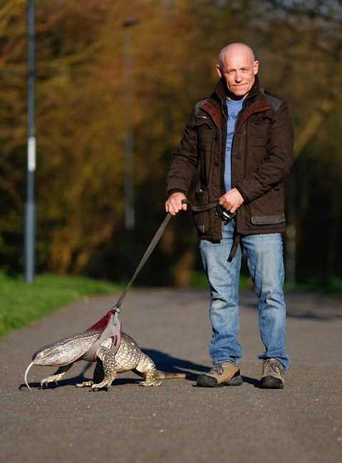 Owner Ordered To Keep His Pet Lizard On A Lead As It Scares The Dogs Metro News
