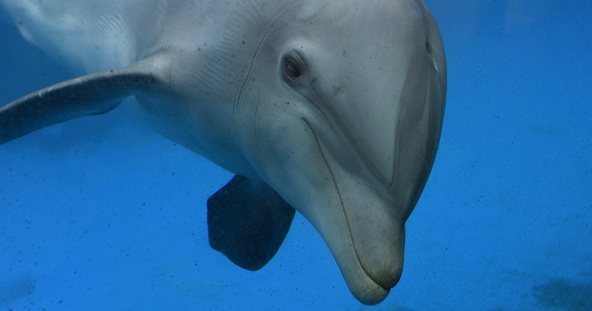 More than 1,000 mutilated dolphins wash up on French beaches in three months