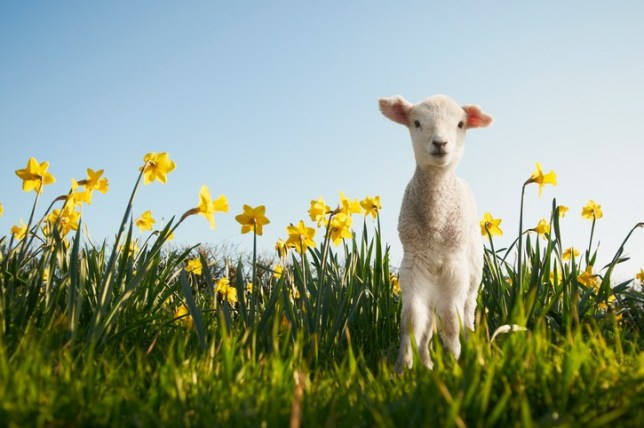 What is the spring equinox? Everything you need to know about the start of spring 2019