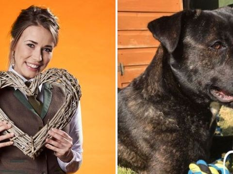 First Dates waitress Laura Tott heartbroken after beloved dog shot and killed