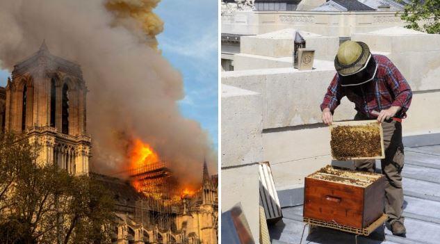 Notre Dame's 200,000 bees kept on roof survived devastating fire