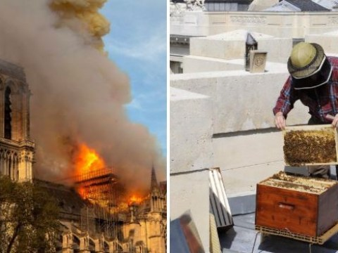 Notre Dame's 200,000 bees kept on roof survived devastating fire