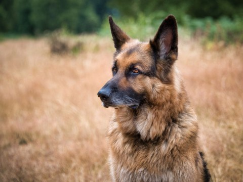 Woman suspects her husband wants to have sex with their dog