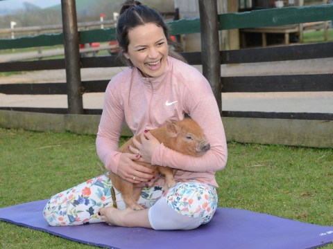 You can now do pilates with miniature pigs