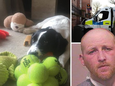 Police puppies so traumatised after 70mph crash with banned driver they had to retire