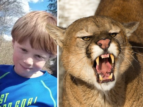Mum jumped on mountain lion's back and prised jaw open to save son, 7