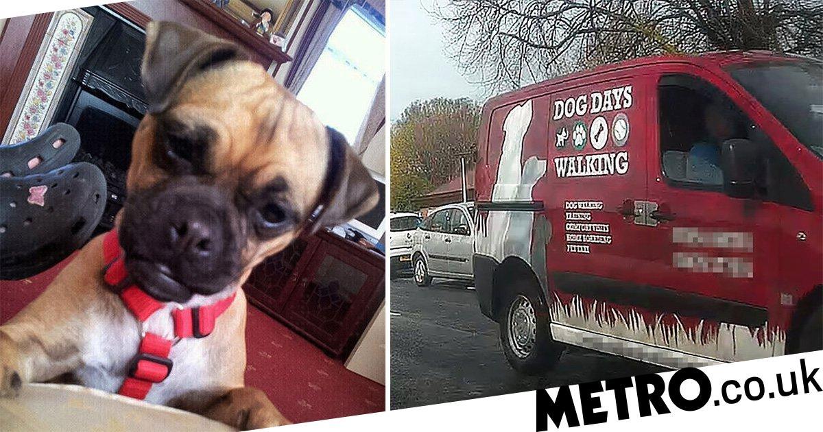 Dog-walker's van filmed driving off after knocking down family pet