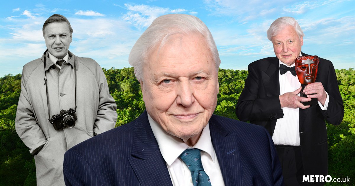 A love letter to David Attenborough