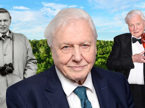 A Love Letter to Sir David Attenborough, the hero saving Earth in Netflix's Our Planet