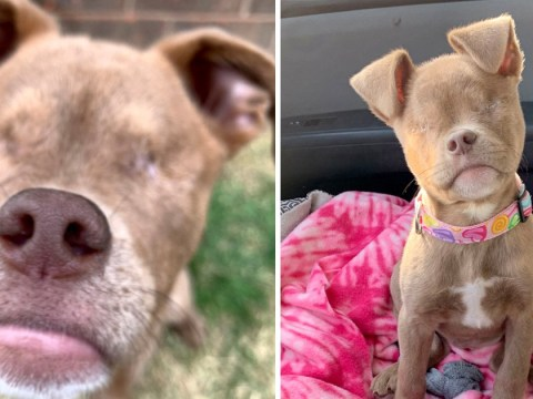 A dog who lost her eyes due to neglect has become an Instagram celebrity