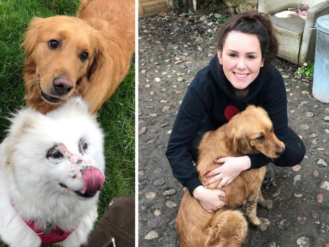 Slaughterhouse survivor dogs adopted by student and given forever home