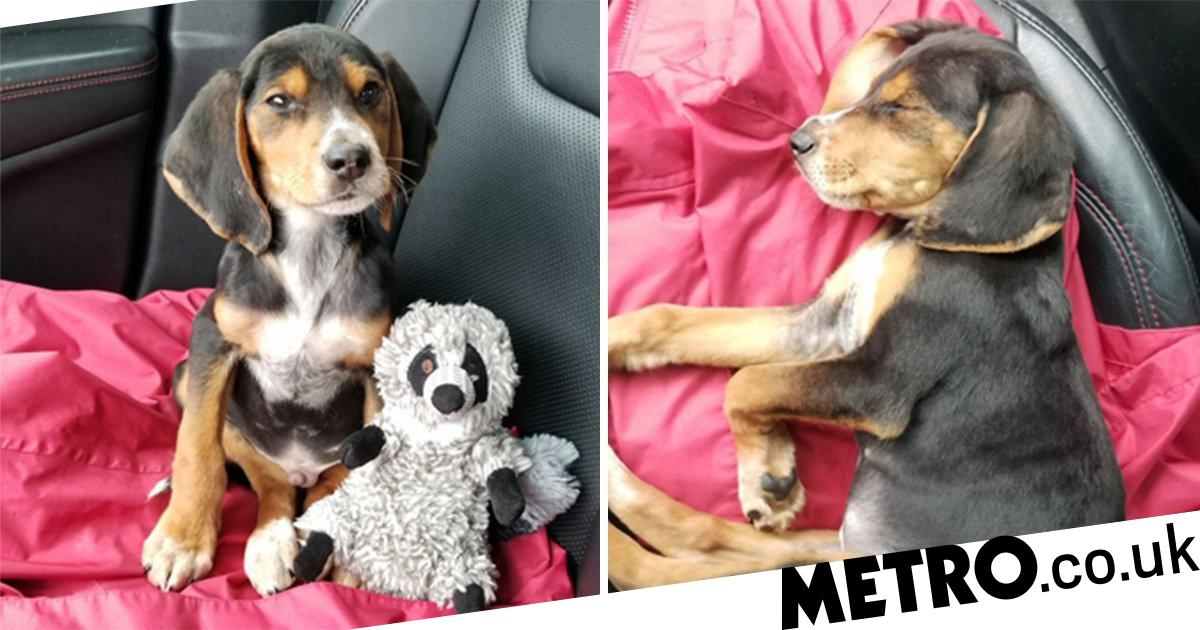 Woman who says she's a 'cat person' finds puppy in a ditch and takes him in