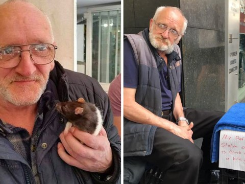 Homeless man urges people to return his beloved pet rat Lucy who was stolen
