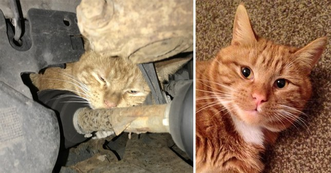Harry in the engine and Harry at home