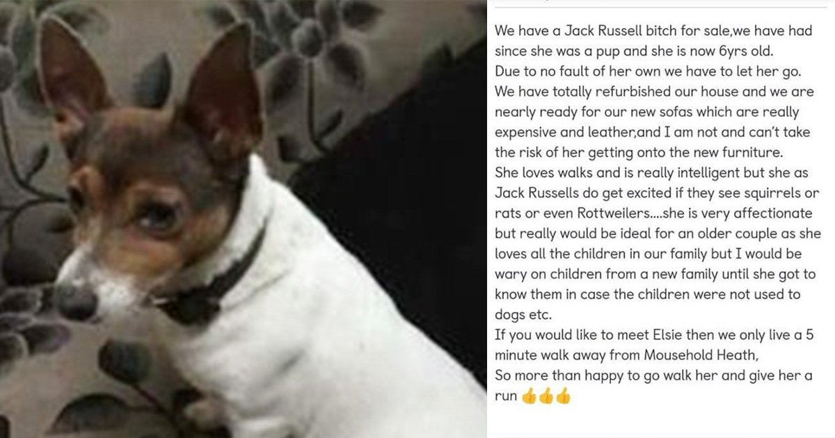 Family puts dog up for sale because they're buying new sofas