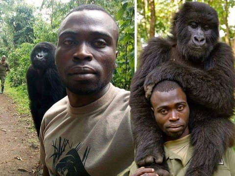 Gorillas put our selfie game to shame as they pose with anti-poaching officers