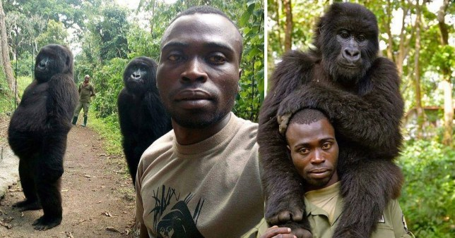 Gorillas pose for selfie with anti-poaching officers