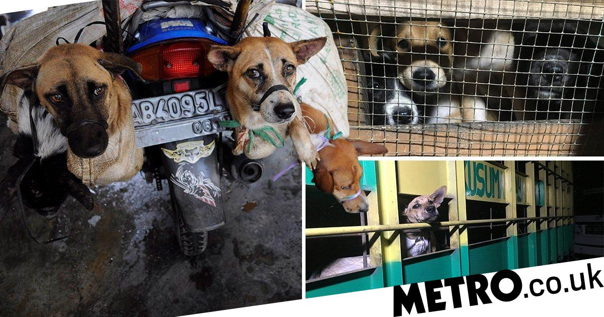 Moment live dogs are beaten and butchered for humans to eat