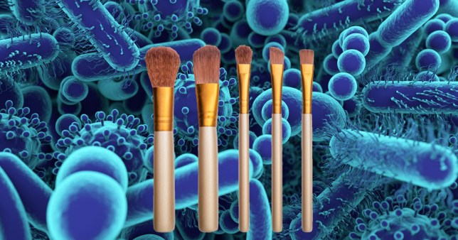 Makeup brushes on a germ background