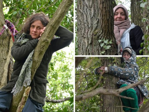 Protesters camp in trees to stop them being chopped down