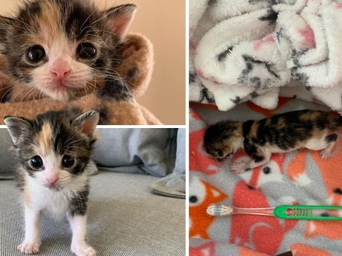 Kitten smaller than a toothbrush is found under an L.A home with her umbilical cord still attached