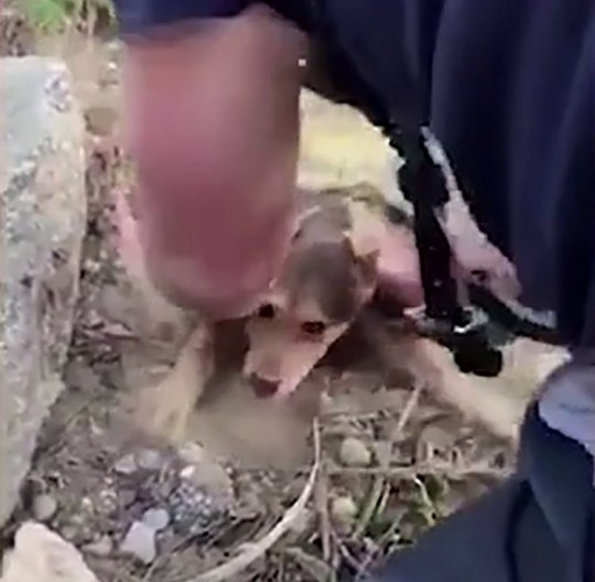 METROGRAB: Puppy's kisses for hero firefighter. A puppy rescued from a beneath pile of rocks in South Carolina showed its immense gratitude to the firefighter who saved him by covering his face with kisses.