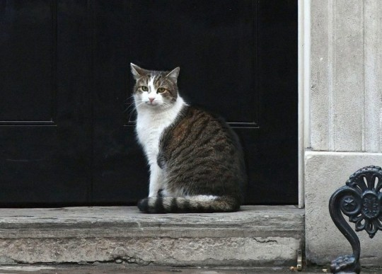 Larry the cat outside 10 Downing Street, London, as the cabinet meets over Brexit. PRESS ASSOCIATION Photo. Picture date: Tuesday April 2, 2019. See PA story POLITICS Brexit. Photo credit should read: Victoria Jones/PA Wire