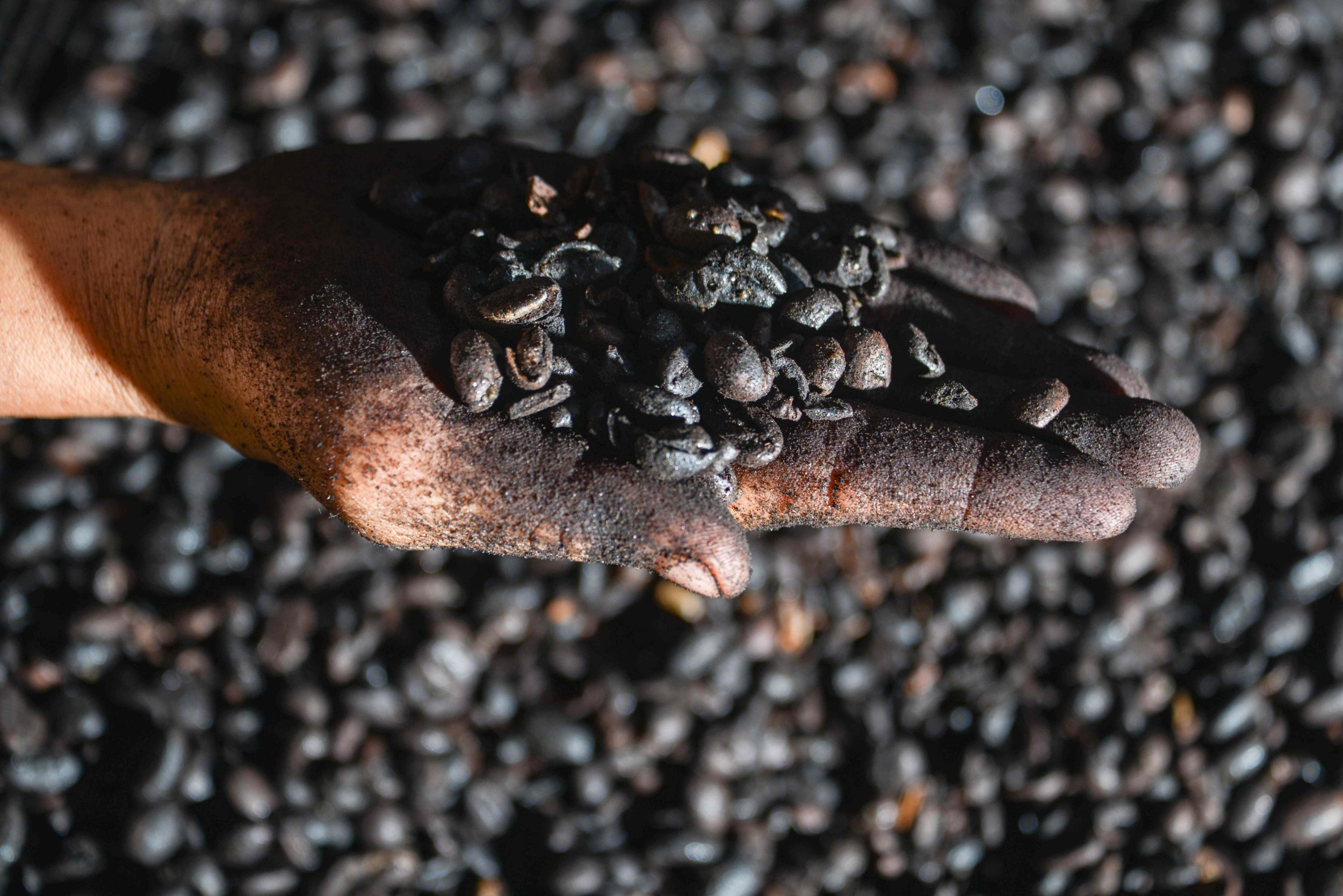 The Swiss government said coffee beans aren't essential for health (Picture: Chaideer Mahyuddin/AFP/Getty Images)