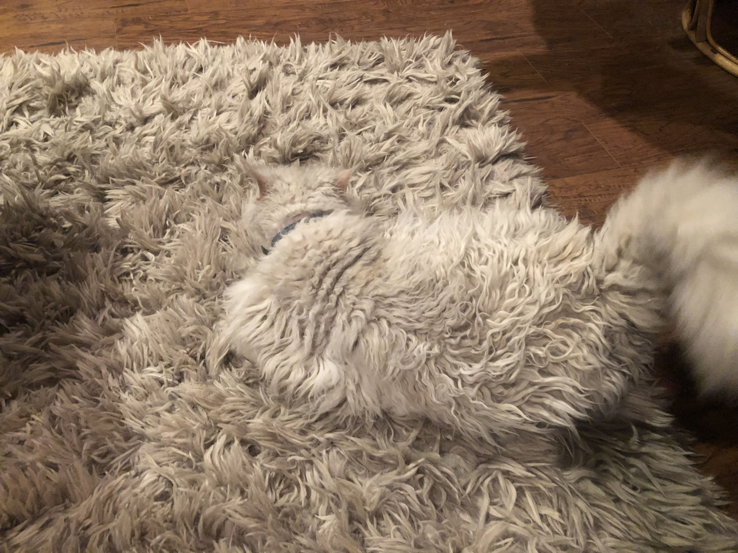 Can anyone find where the cat is on this rug?