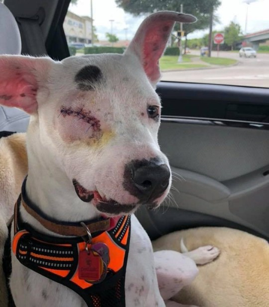 Bubbles was shot in the face and beaten with a hammer (Picture: @khbubbles/Hook News)