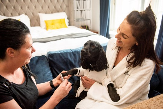 PIC FROM Caters News - (PICTURED: The Lawrence Hotel, in Burnley, Lancs has now introduced spa packages for posh pooches so that they can relax and enjoy a range of treatments while lounging in white robes to match their owners) - A five star hotel has introduced spa packages for posh pooches including curly blow dries, massages and pedicures. Its no surprise that The Lawrence Hotel, Burnley, Lancs, is now popular with with dog lovers after launching their new services.Pooches can relax and enjoy a range of treatments while lounging in white robes to match their owners.SEE CATERS COPY