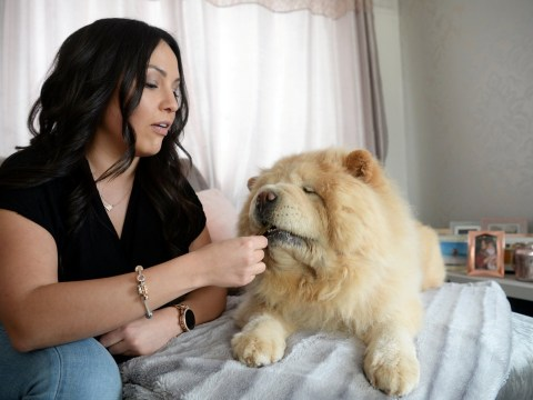 A woman is willing to remortgage her home to raise £20,000 to save her dog's life