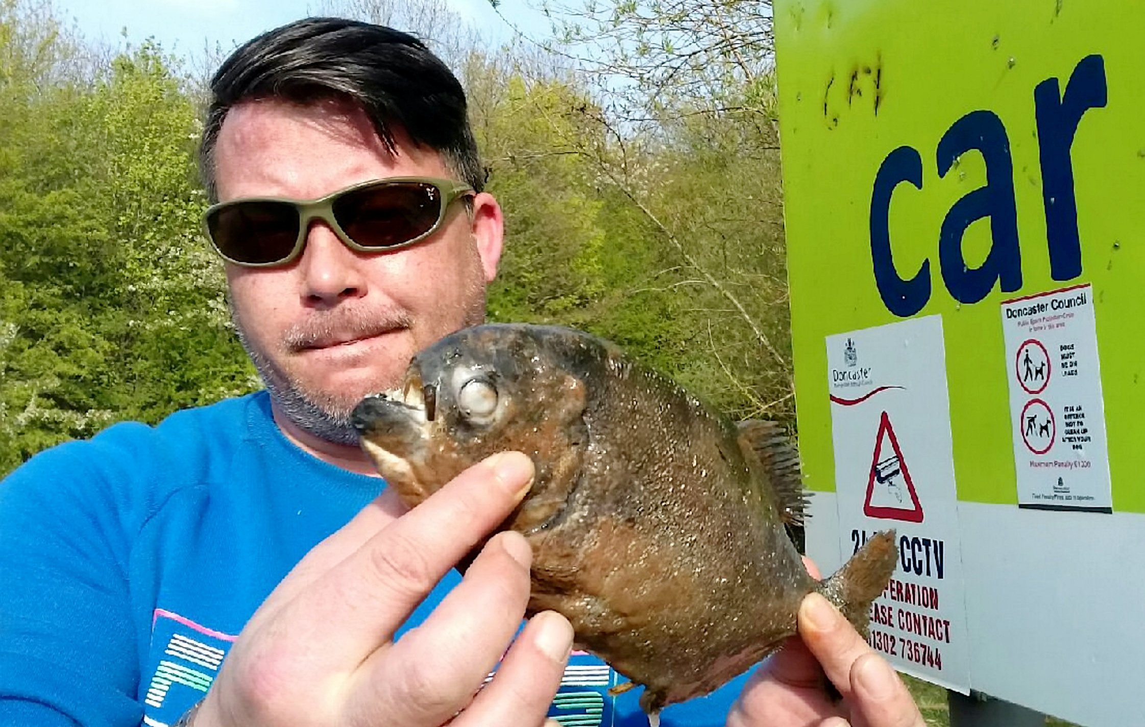 Davey White with the Piranha. Stunned fishermen have found two deadly PIRANHAS in a Yorkshire lake - where a number of ducks have vanished. See SWNS story SWLEpiranha. The carnivorous fish with rows of sharp teeth - which normally stalk the waters of the Amazon - were both discovered in the water in Doncaster. Locals at the beauty spot have say they noticed a reduced number of ducks and fish at the lake - and think the flesh-eating fish could be responsible.