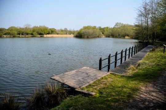 Piranhas found in Yorkshire lake where ducks have vanished