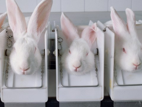 Rabbits 'deliberately infected with cholera in secret tests' at universities