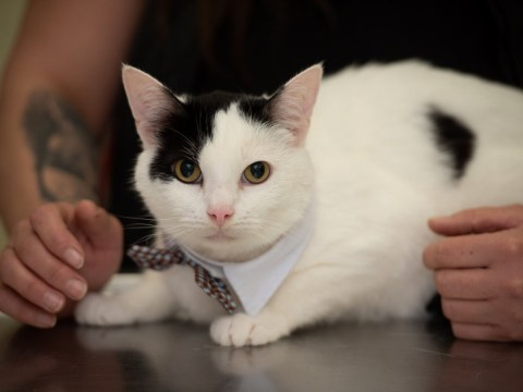Cat's life saved by 'gender reassignment' surgery