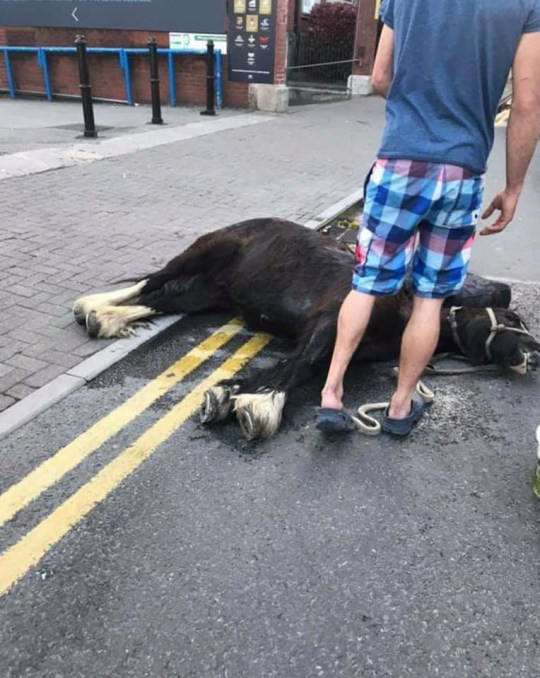 Two men arrested after second horse collapses on city street Provider: Facebook/Jeanette L Cook Source: https://www.facebook.com/photo.php?fbid=10218588716054376&set=pcb.10218588717134403&type=3&theater