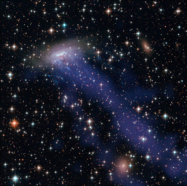 This composite view of ESO 137-001 includes visible light from Hubble and X-ray light from the Chandra X-ray Observatory (in blue). It reveals a tail of hot gas that has been stripped from the galaxy. Credits: NASA, ESA, CXC